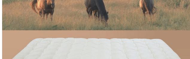Paardenhaar matrassen